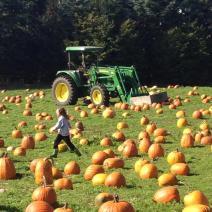 tractor_pumpkins